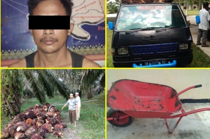 Foto pelaku (MK) serta barang bukti yang telah diamankan Polsek Kepenuhan